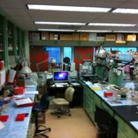 my lab 2013-1.JPG