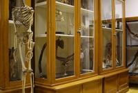 17.Anatómiai Múzeum.JPG